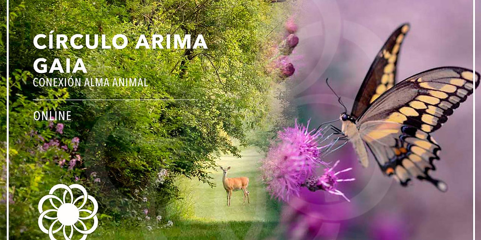 Círculo ARIMA GAIA
