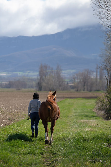 Harmonie_Reiki-cheval-humain.jpg