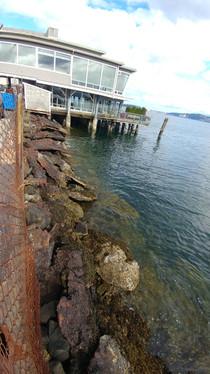 Salty's Pier Emergency Repair - Material Survey & Permitting