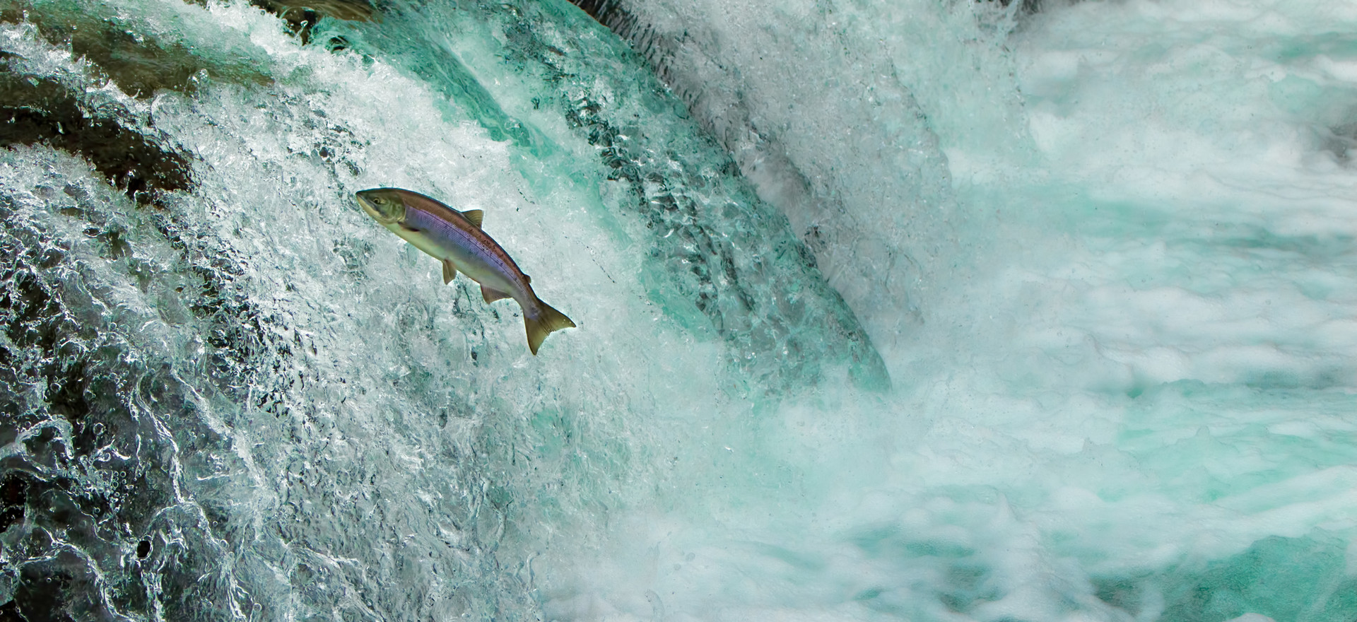 Fish Passage