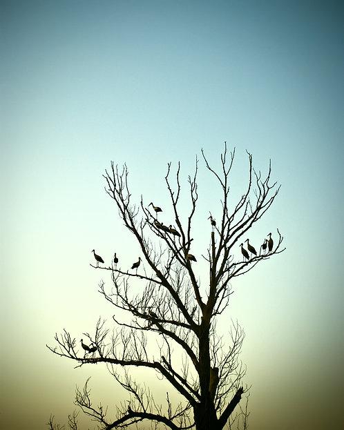 Святі птахи
