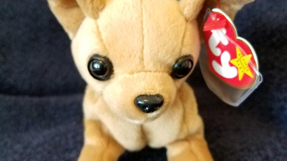Tiny the Chihuahua