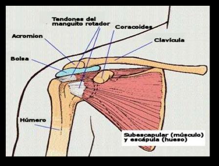 Tienes dolor de hombro o codo ? descubre cuáles son sus..