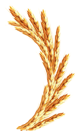 Логан зерно правый B&b La Locanda Cistercense