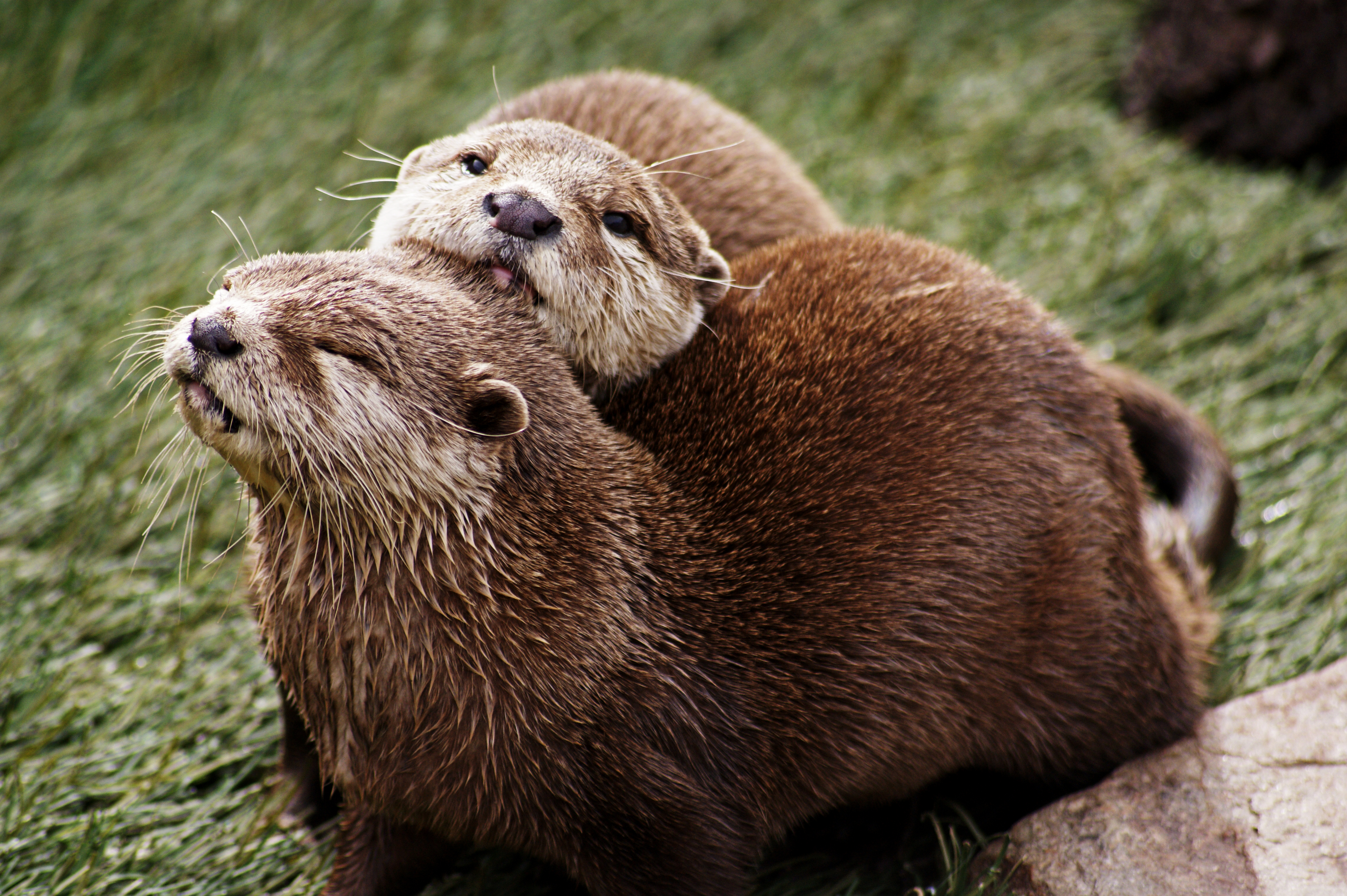 Otters 2
