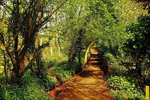 Lasswade Path