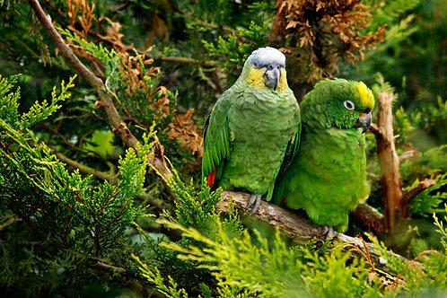 Parrot Folliage