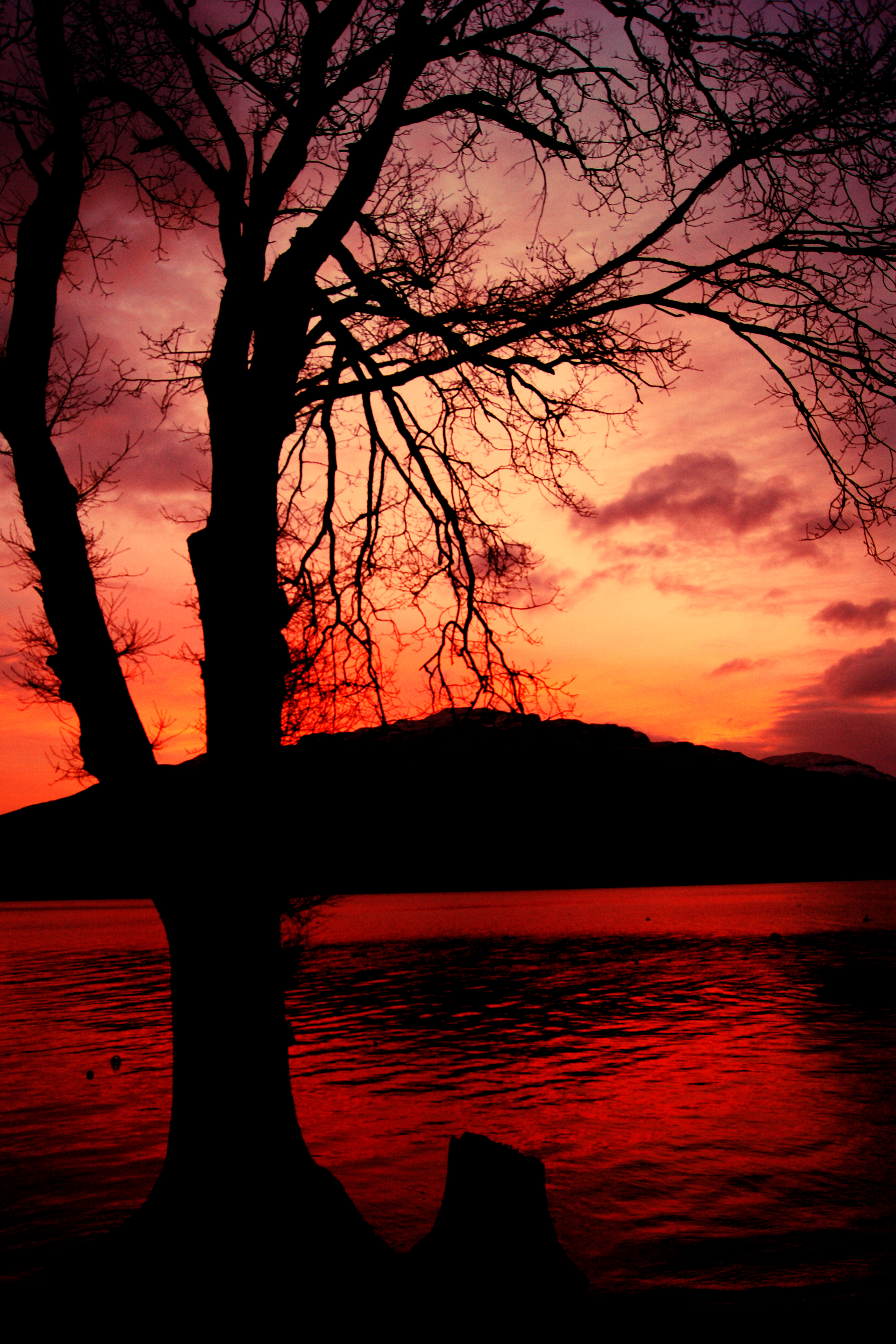 Sunset Tree - Loch Lomond