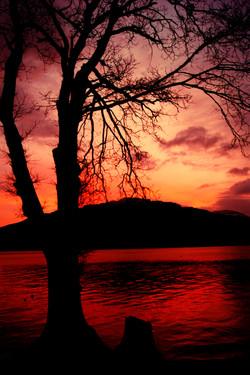 Sunset Tree - Loch Lomond