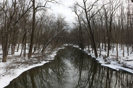 Harms Woods submitted for dedication as Illinois Nature Preserve