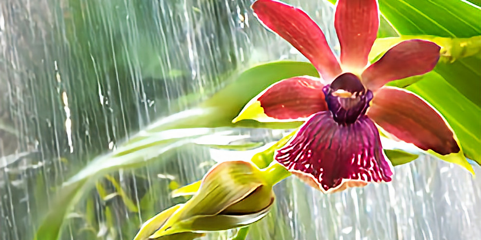 The Orchid Show: In the Tropics