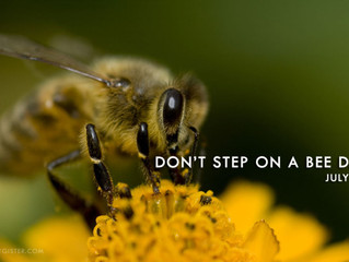 """""""don't step on a bee day"""" 10th July"""