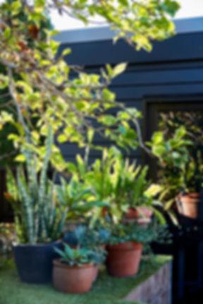 modern kitchen design / interior design / sydney / australia / ashfield / joinerybackyard / patio / interior design / architecture design / renovations