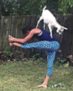 who wants to do goat yoga with me on Sun