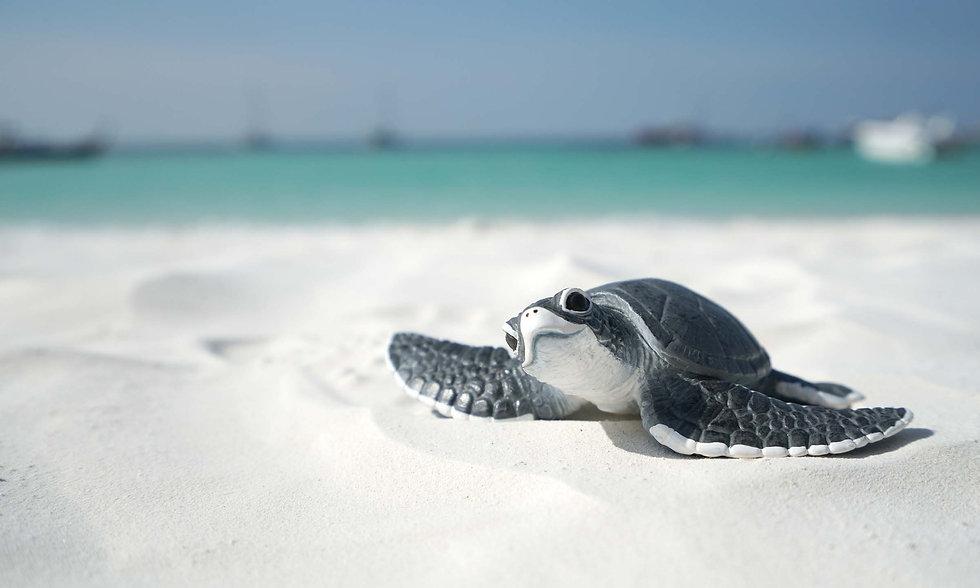 TurtleComms_homepage_header.jpg