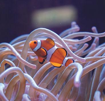小丑魚資產 1.jpg