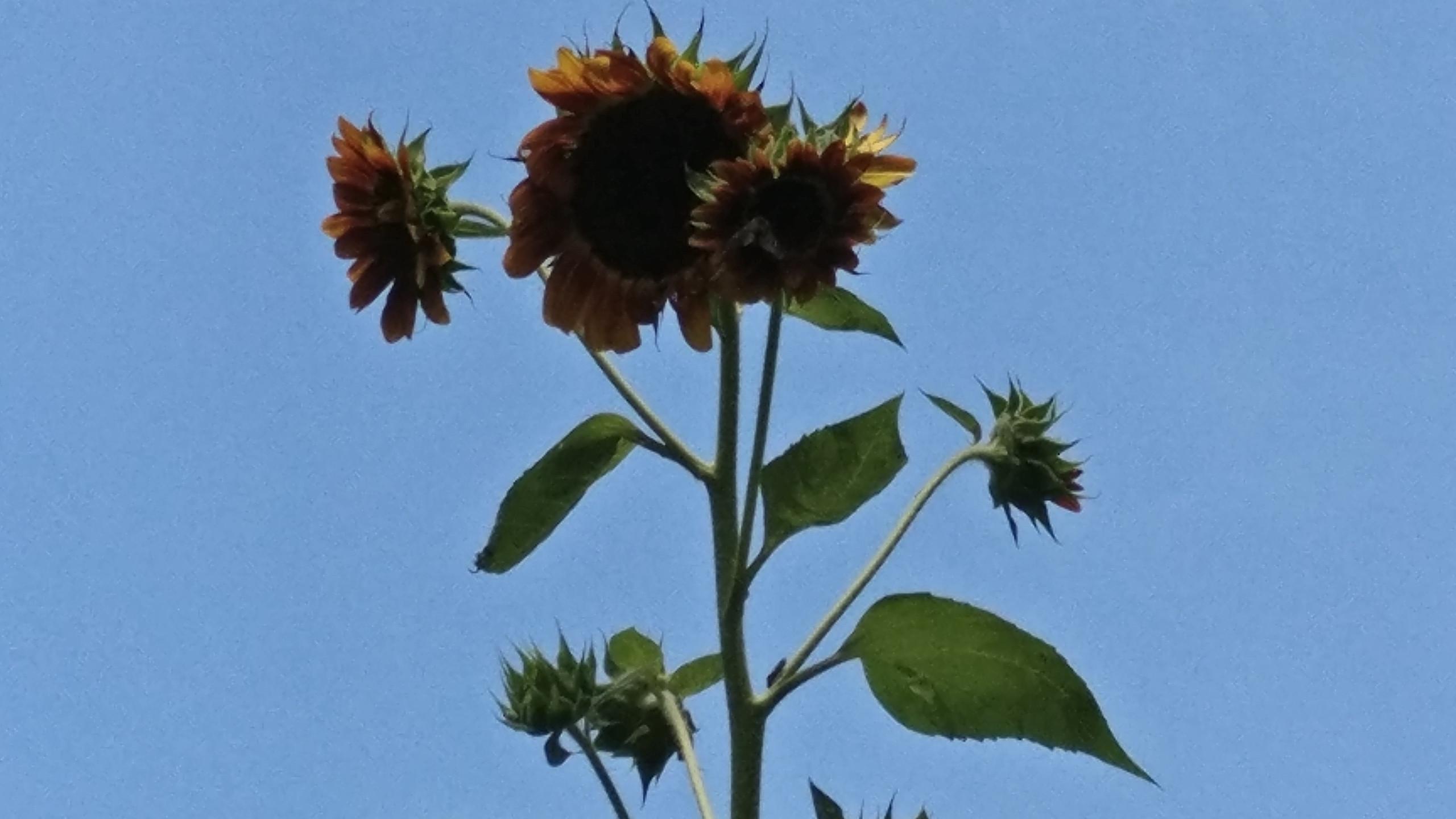 Sunflower Tower