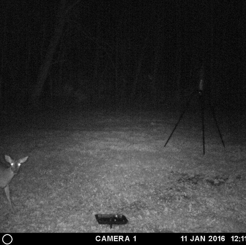 Deer Jan 2016 (1)_edited_edited