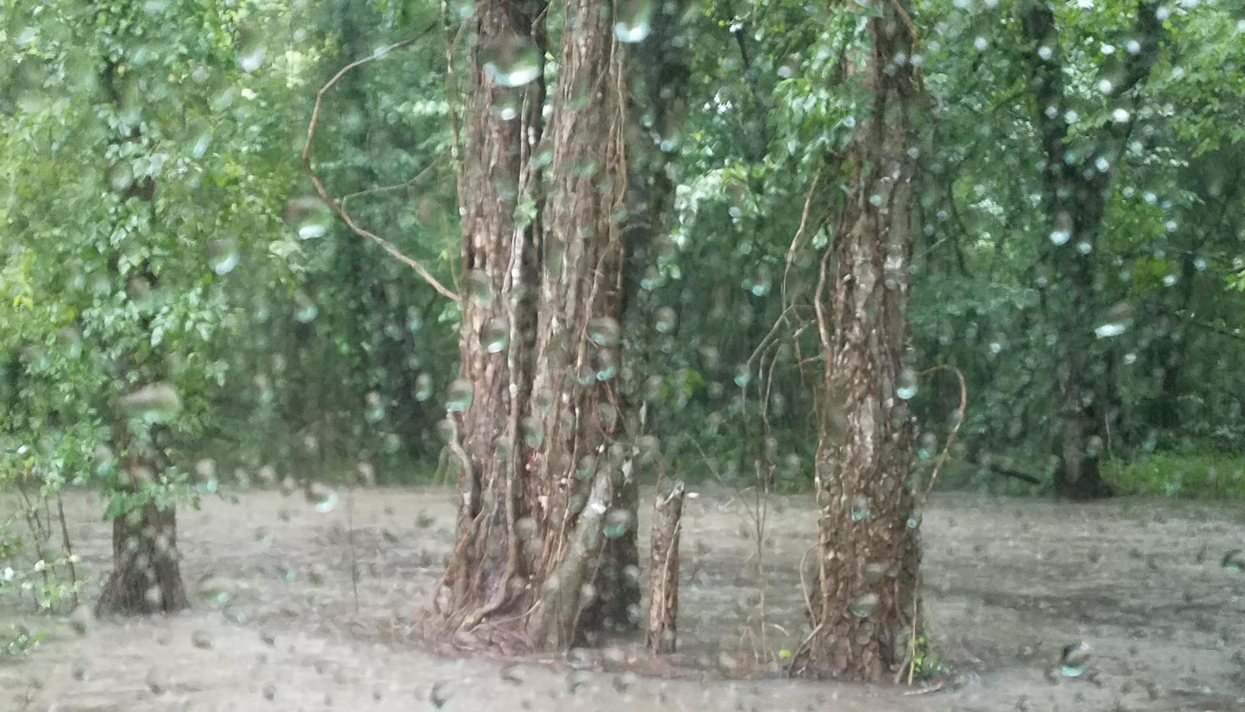 Rain 29 June 2017 (5)