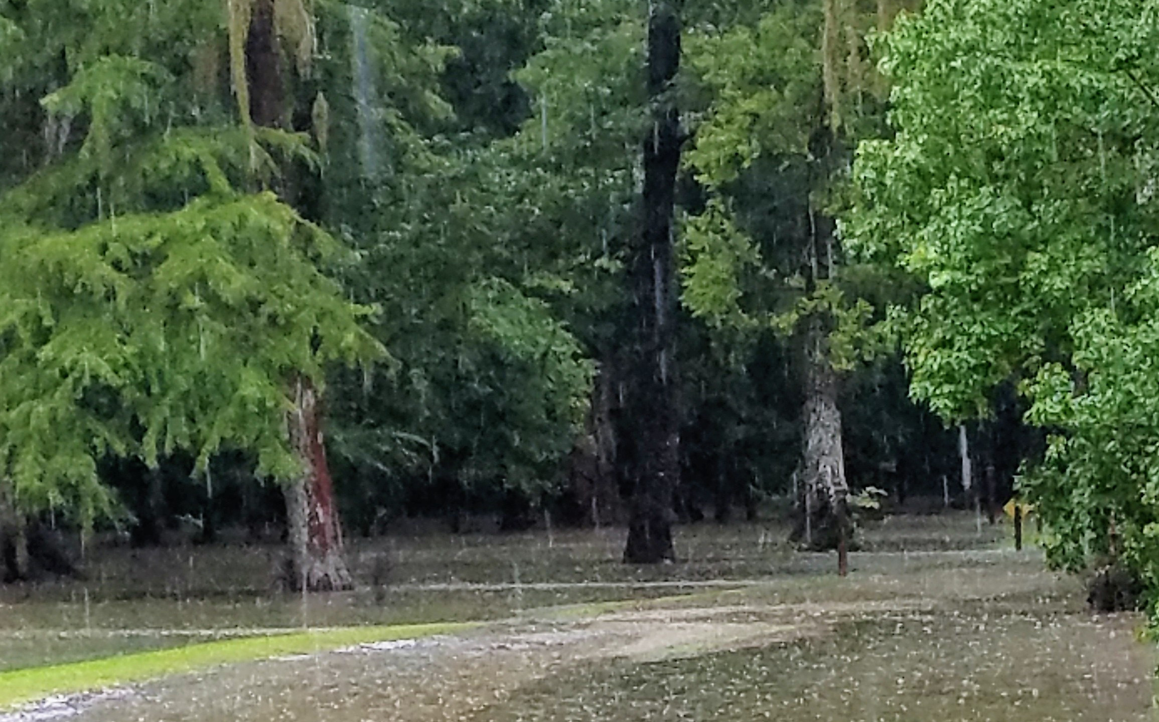 Rain 29 June 2017 (6)