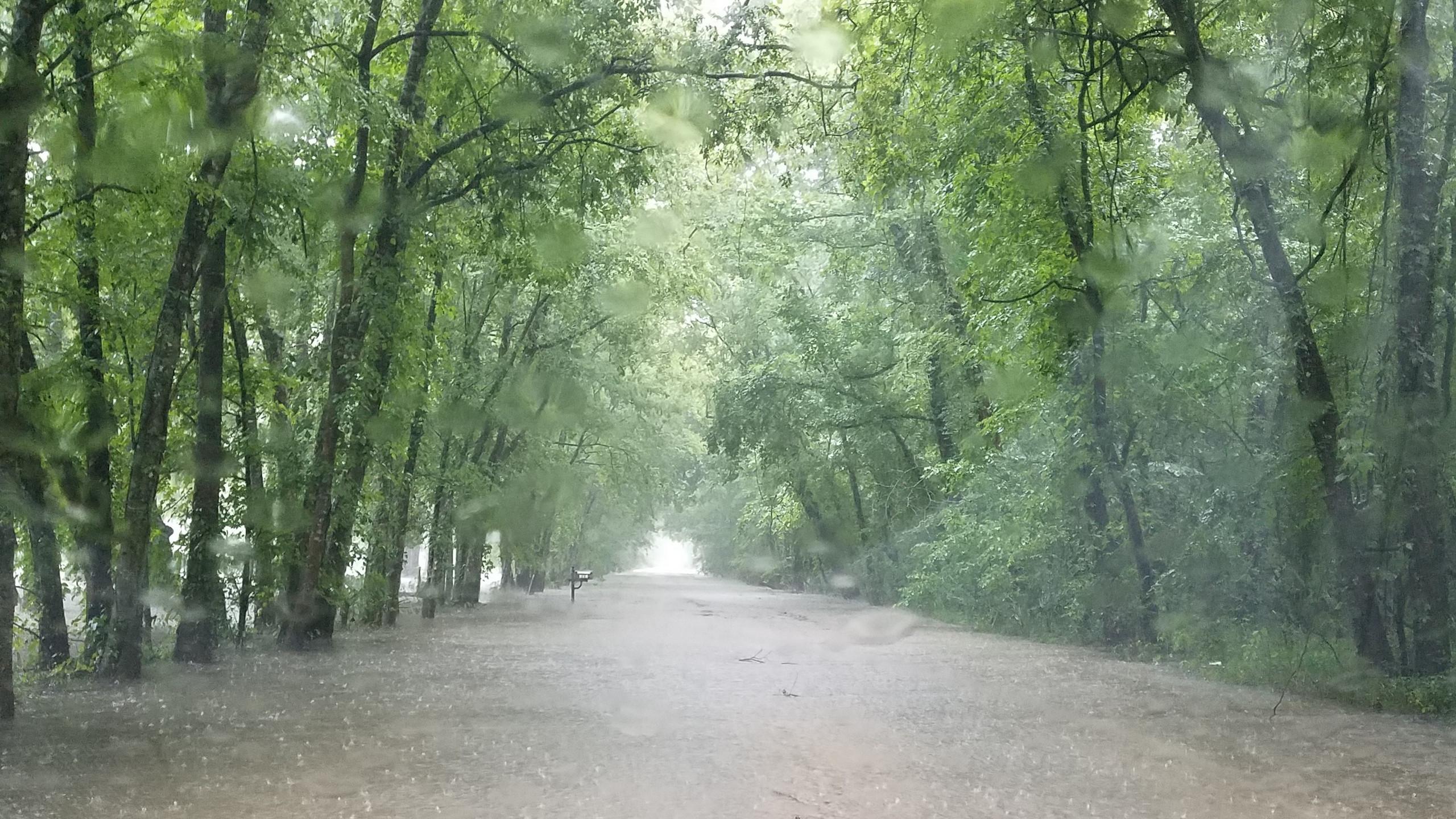 Rain 29 June 2017 (1)