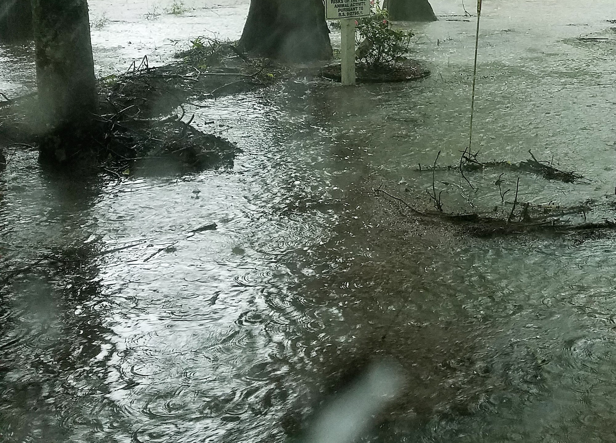 Rain 29 June 2017 (2)