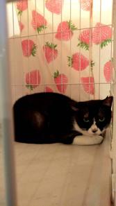 あかりやの猫ーこんどはカナちゃんです。