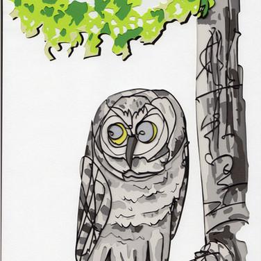 木陰のフクロウ