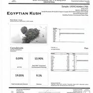 #13 Egyptian Kush