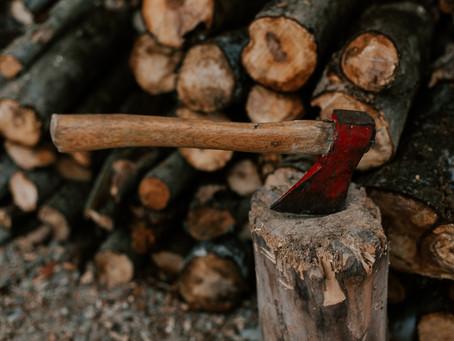 Os caminhos da evolução da mecanização florestal