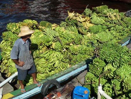 A Amazônia está enfrentando 4 crises – veja 4 soluções para protegê-la
