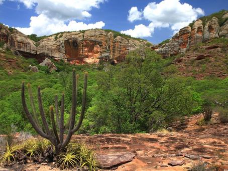 Dia 28 de abril: Dia Nacional da Caatinga. Entenda mais sobre o bioma e sua importância
