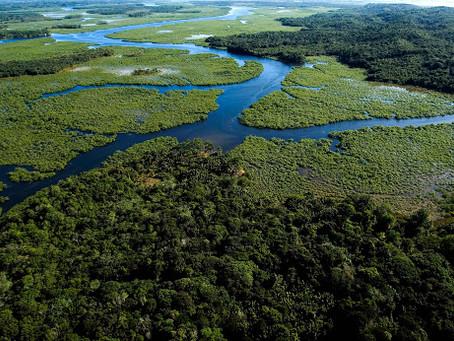 Mapa inédito aponta florestas tropicais como celeiro de espécies desconhecidas