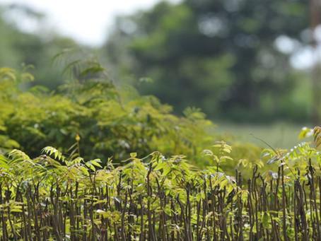 O que é restauração florestal em 6 perguntas