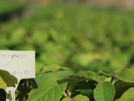 Três estratégias para impulsionar a silvicultura de nativas no Brasil