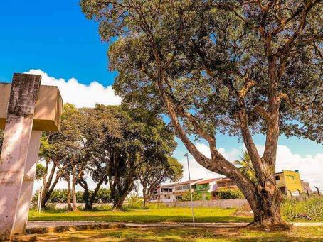 Arborização Urbana: Você sabe a importância de um projeto?