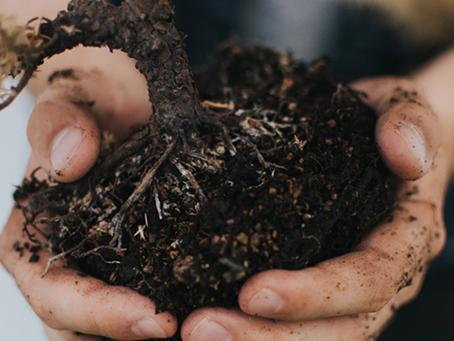 O que você precisa saber para tornar o solo adequado para o plantio