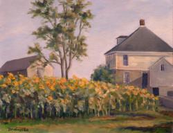 Buttonwood Farm Sunflowers, Oil, 16x19