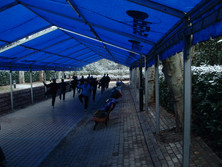 shanghai 17 feb (5).JPG