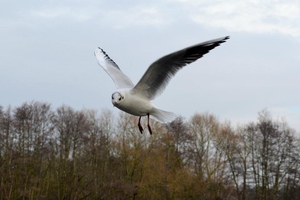 Flying in the Norfolk Broads