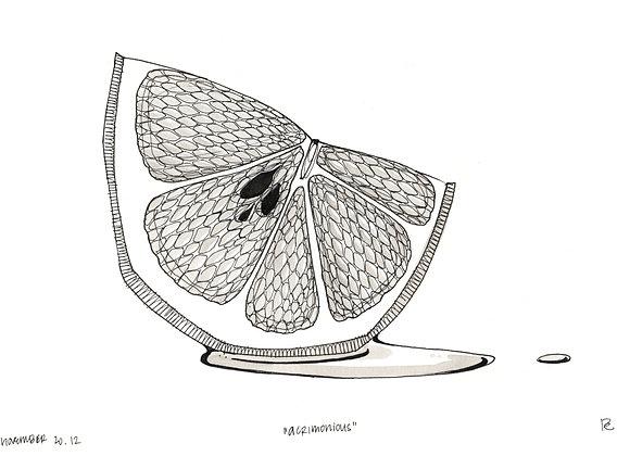 Word.A.Day Illustration // Acrimonious