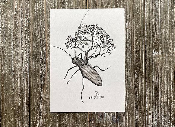 Beetle // INKtober No. 7