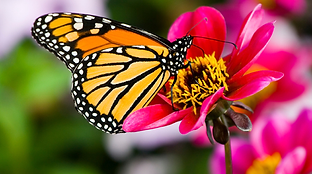 Fruits of Spirit Butterfly.png