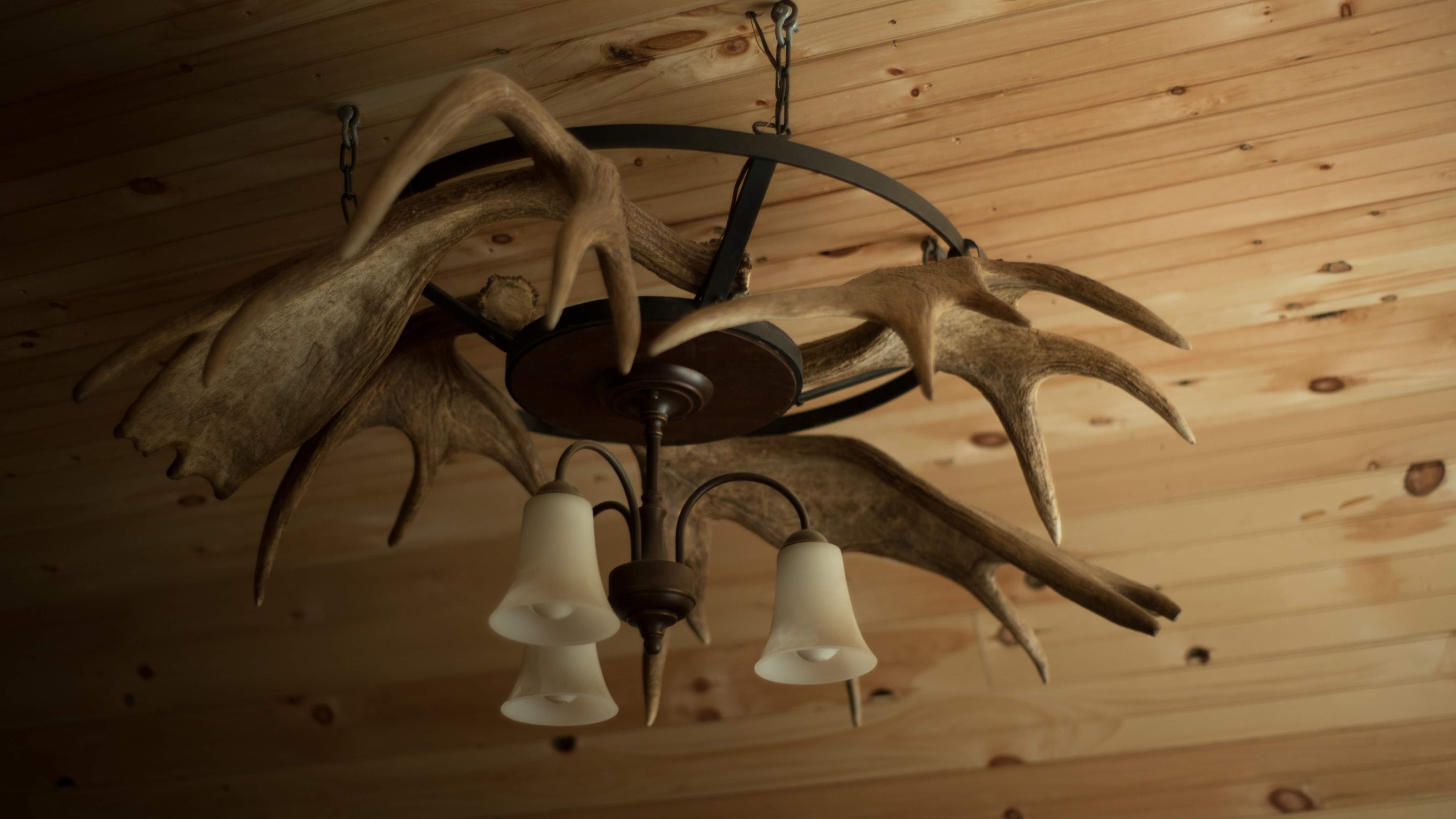 Moose antler chandelier $1400.