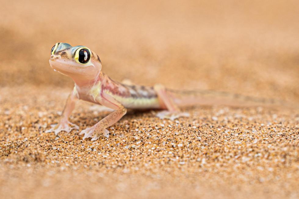Namibia-10.jpg