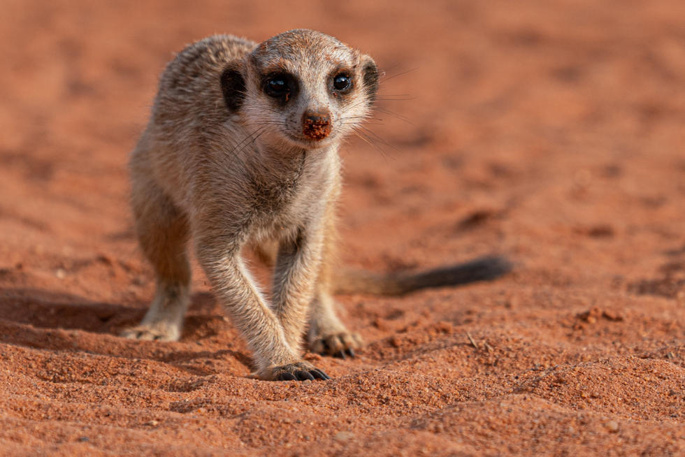 Namibia-4_edited.jpg