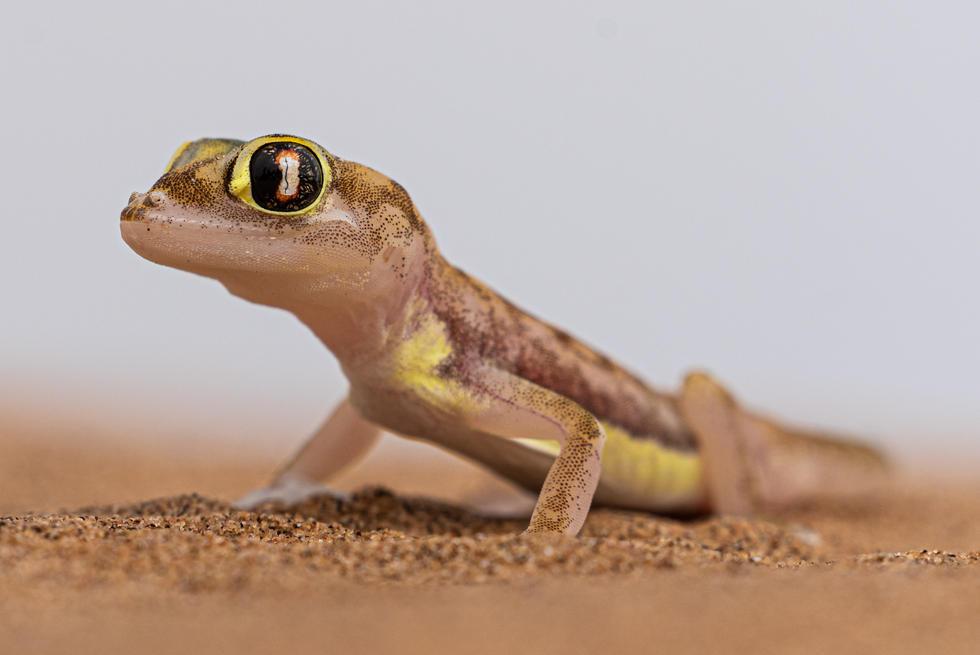 Namibia-13.jpg