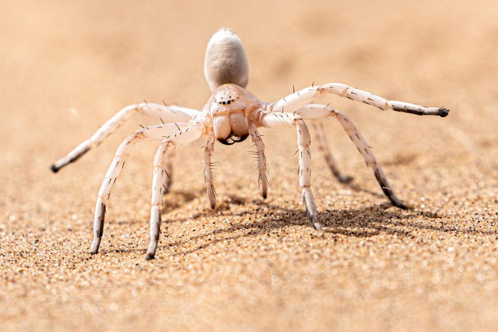 Namibia-14.jpg