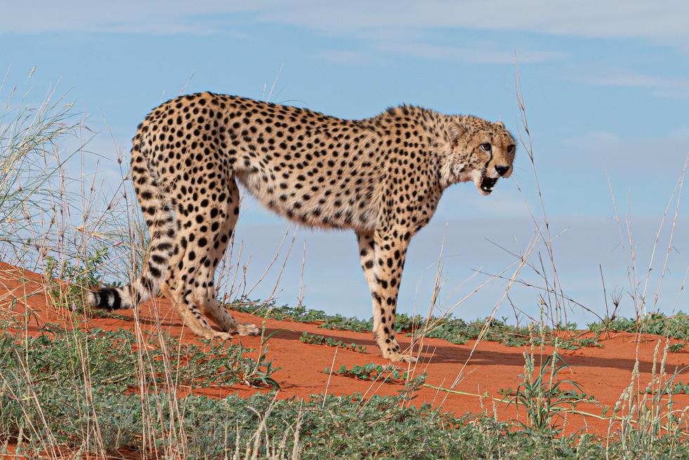 Namibia-3.jpg