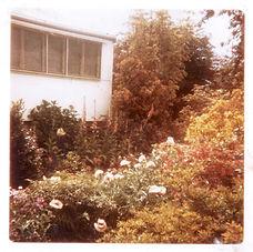 Gwen (Suzie's) garden Longwarry Road 196
